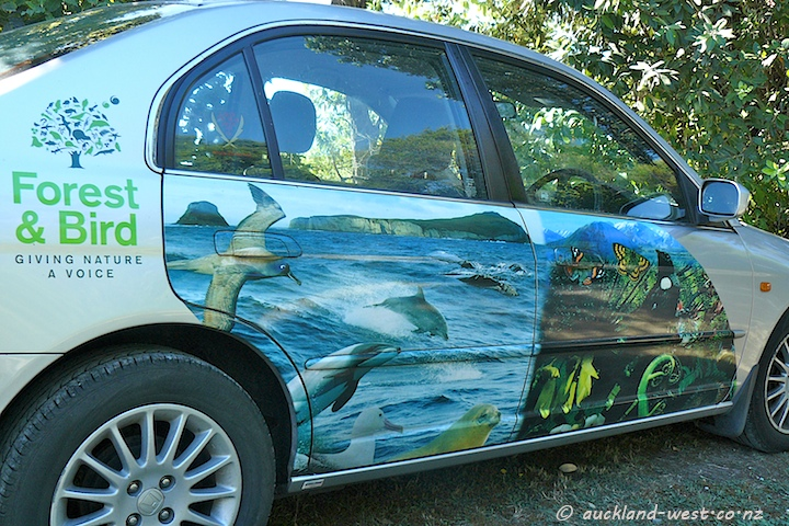 Nice Car: Forest and Bird