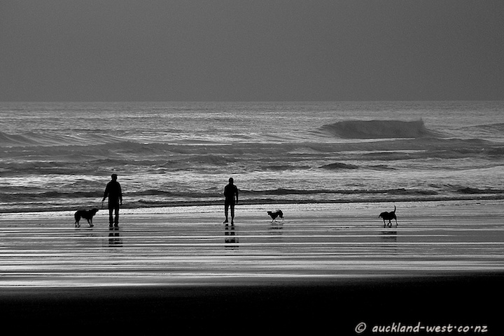 Dogs at Piha Beach
