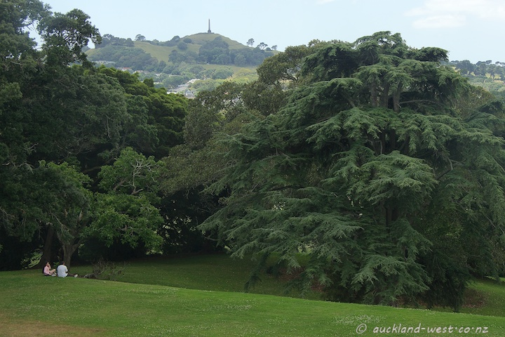 View of One Tree Hill