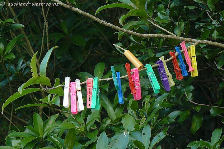A Lineup of Pegs