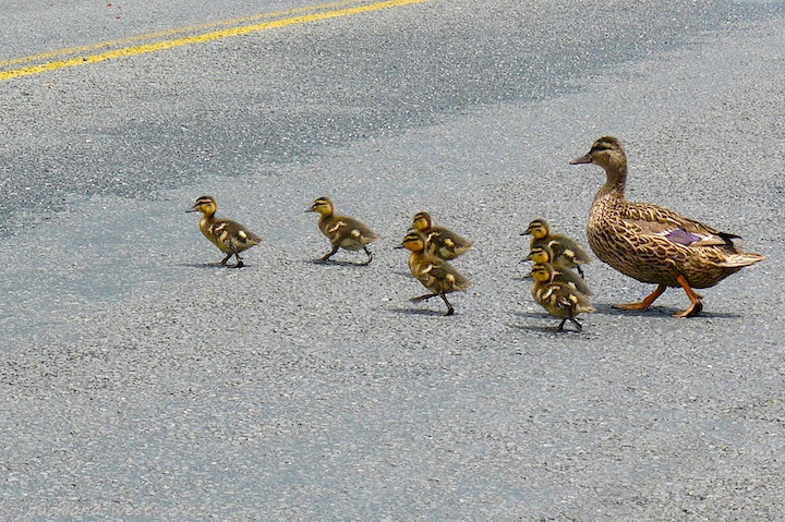 Crossing the Road