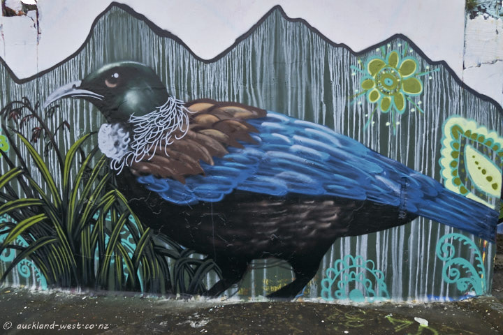 Tui on the wall